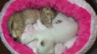 「かわいすぎる」のか?「ひどすぎる」のか? 一人ぼっちで眠る子猫