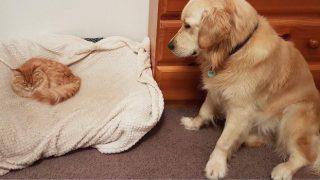 「すみません。そこは、わたしのベッドなんですが・・・」