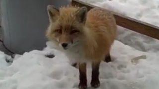 「リアル・ディズニー映画」暖をとるために集まる動物たち