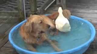 「一生の友達」オッキーとビギー
