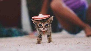 子猫の小さなソンブレロ
