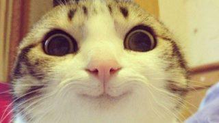 「彼の気を引きたい時に、いつも送っている画像がこれ」抵抗不能な猫スマイル
