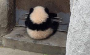 「今だ!この瞬間にかけろ!」遊びを創造する子供のパンダ