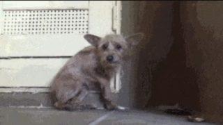 「愛があるところに命がある」人が捨て犬の信頼を取り戻すまでの感動ドラマ