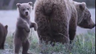「さあ、僕たちと一緒に行こうよ!」手招きする子熊