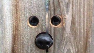 「お隣さん、こんにちは」犬用のぞき穴