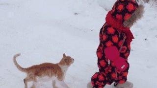 幼児に体落としアタックを仕掛けた猫。はたしてその犯行動機は・・・?