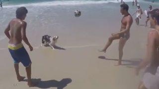 「リオのサッカー犬」3人と1匹のリフティング
