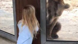 「いないいないばあっ!」女の子と遊ぶヒグマ