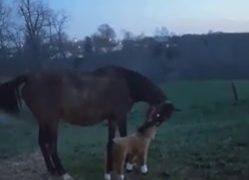 【爆笑】人間のくだらない冗談に、本気で怒る馬