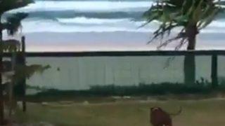 【爆笑】「テリア、空を飛ぶ」ゴールドコーストのビーチで張り切りすぎたテリア