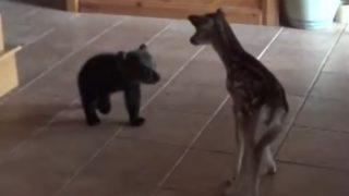 【ディズニー映画実写版?】小熊、小鹿に出会う