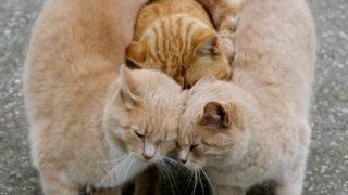 """【KAWAII動物写真】「農家の用心棒」""""農家猫""""たちの抱擁シーン"""