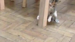 【激闘?】子猫のネコ・ジャブ・パンチは虫の進撃を止められるか!