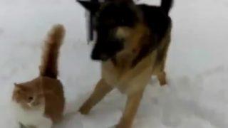 【犬と猫の大爆笑動画】面倒見が良いけど、正直迷惑な奴