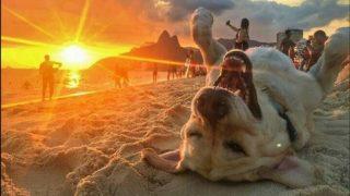 【嫌なことがあった日は】ブラジルのビーチにいる最高に幸せな犬の写真を見る