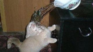 【衝撃の瞬間】ネコの目の前で水の入った丼ぶりがバウンドした瞬間