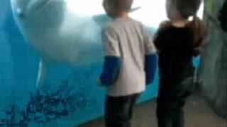 【海外の反応】「シロイルカ=知的生命体」と信じて疑わなくなる動画