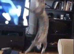 【海外の反応】「飼い猫史上最高」との呼び声も高い最高難度のスーパーキャッチ