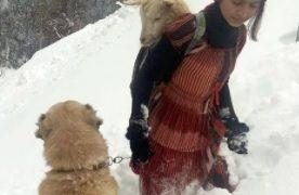 【海外の反応】美少女羊飼いと頼れる「相棒」、ヤギの親子を救う