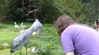 【海外の反応】腰が低そうな「動かない鳥」