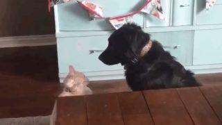 【海外の反応】犬と猫、仲直りの瞬間