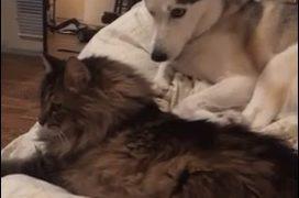 【海外の反応】カメラは見ていた!猫に突然パンチを浴びせる犬