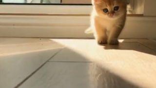 【海外の反応】お日さま対子猫