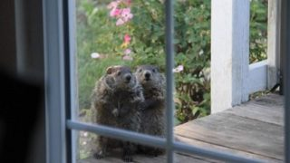【海外の反応】叔母さんの家を訪ねてきた隣人