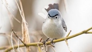 【海外の反応】「彼女のお父さんにそっくり」な小鳥