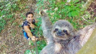 【海外の反応】自撮り棒で撮れた「ナマケモノ・スマイル」