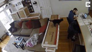 【海外の反応】監視カメラが捉えた、猫のイタズラ一部始終