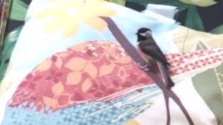 【海外の反応】「偶然?それとも勘違い?」イラストの小枝にとまる小鳥