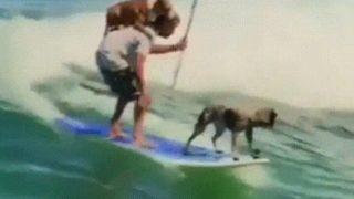 【海外の反応】サーフィンの世界チャンピオンがドッグトレーナーになると、こんなことができる