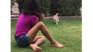 【海外の反応】少女が「猫の悪意」に気づく瞬間