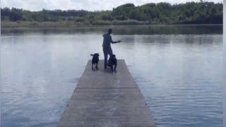 【海外の反応】目指せ、ダイビング犬!「ドックダイブ」の教え方