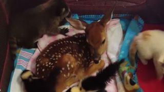 【海外の反応】「リアル・ディズニーランド」子供動物園のベビーブーム