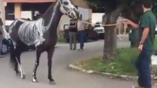 【海外の反応】馬の解剖学「生きた教材」