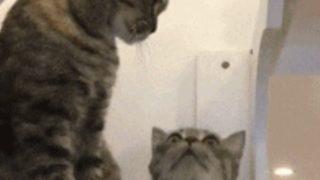 【海外の反応】傑作ショートコント「出る猫は打たれる」