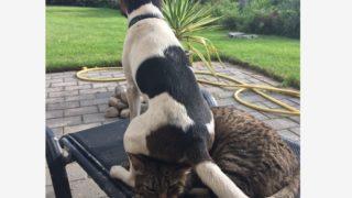 【海外の反応】「言いたいことは山ほどある…」無礼者の犬に耐える猫