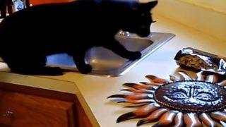 【海外の反応】「猫好きへの挑戦状」猫が驚いた理由を解明せよ!