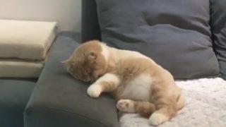 【海外の反応】夢の中で疾走する猫