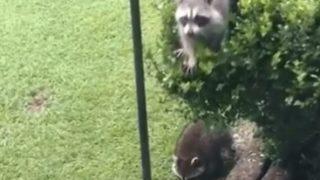 【海外の反応】全米で「迷惑だけど憎めないキャラ」を確立した動物とは?