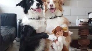 """【海外の反応】「オーストラリアで最も頭がいい犬」の""""パーフェクトな記念写真"""""""