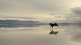 【海外の反応】「天国にいる愛犬を思い描けた…」気鋭の撮影監督が撮ったハスキー