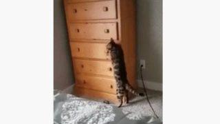 """【海外の反応】""""タンス猫""""は「史上最高のかくれんぼマスター」"""