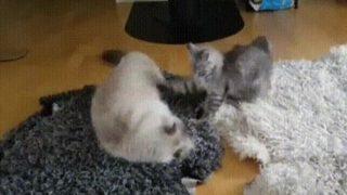 【海外の反応】ブチ切れ状態でブレイクダンスする猫