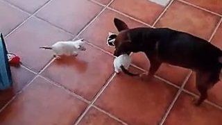 【海外の反応】「フル・アクティブモード」の子猫たちの子守を命じられた真面目な犬
