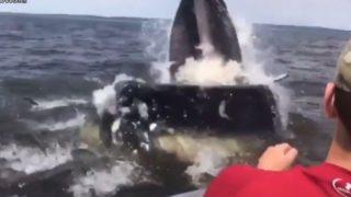【海外の反応】ザトウクジラ、漁師さんにニシンを1匹おすそ分け