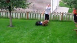 【海外の反応】新エクストリーム・スポーツ誕生!?「犬ぞりボディサーフィン」